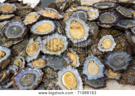 Raw limpets on display on a market