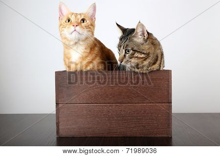 Two cats in wooden box on table isolated on white
