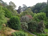 image of backwoods  - Garden tree landscape photographed at Collaton Fishacre in Kingswear in Devon - JPG