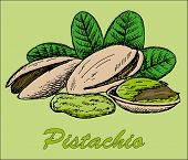 pic of pecan tree  - nut pistachio - JPG