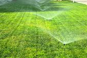 pic of sprinkler  - garden sprinkler on a sunny summer day during watering the green lawn - JPG