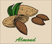 foto of pecan tree  - nut almond - JPG
