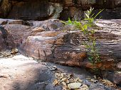 foto of struggle  - Young tree struggling to grow in rocks - JPG