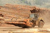 image of wheel loader  - A large wheeled front end log loader working the log yard at a lumber processing mill that specializes in small logs - JPG