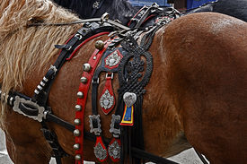 picture of workhorses  - Horse ready for the parade with harness of decorations - JPG