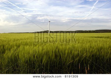 Windmills and a barley field