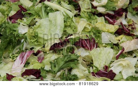 Fresh Green Salad.