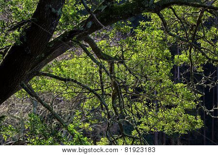 Tree Branches Illuminated By Sunlight