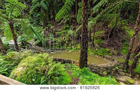 Hot-spring Pool In Tropical Forest