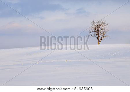 Lone Tree and Snow Covered Field