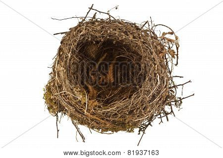 Empty Bird Nest Isolated On White Background