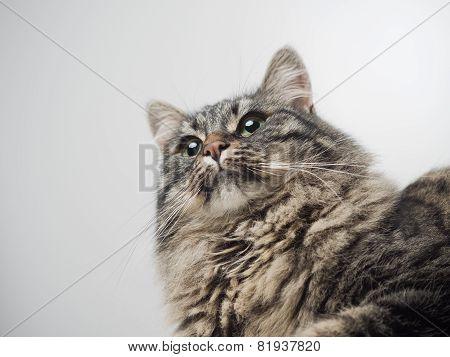 Cute Cat Looking Away