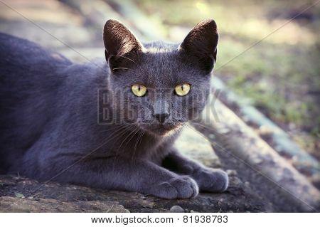 Beautiful Silver Cat