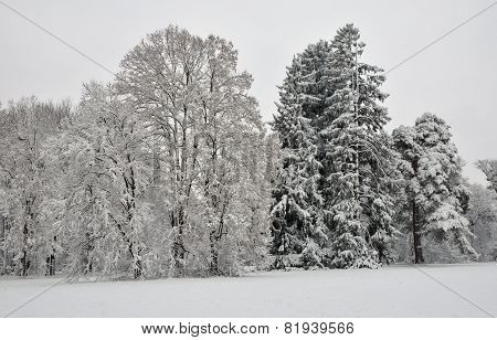 Winter landscape. Snowfall in the park. Alexandria Park, the city of Bila Tserkva, Ukraine.