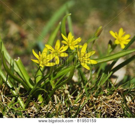 Yellow Flower, In Spring Time