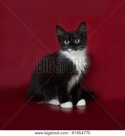 Black And White Fluffy Kitten Sitting On Burgundy