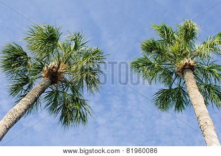 Two palms