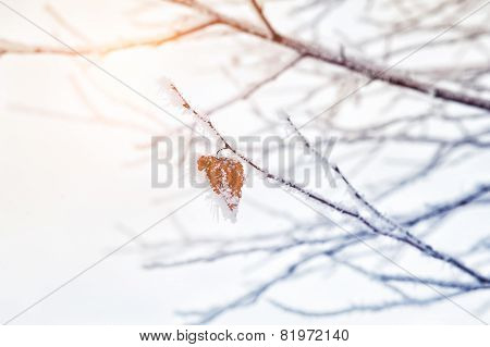 Hoarfrost And Snow On The Trees In Winter Forest