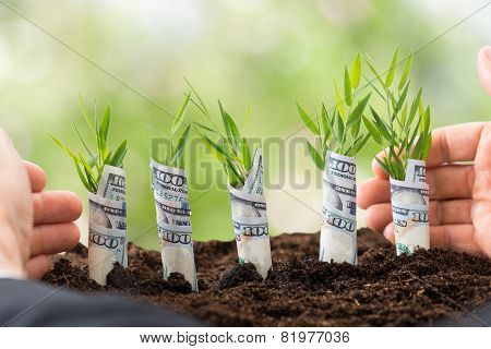 Businessman Protecting Sapling