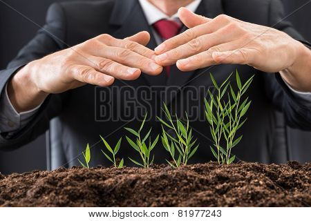 Businessman's Hand Over Plants