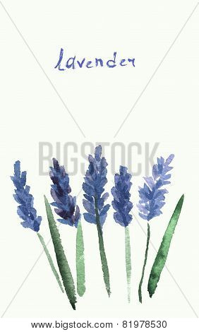 Vector watercolor lavender