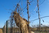 foto of horses eating  - Horse eating form a fence in winter - JPG