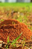 stock photo of fire ant  - Nest on green grass at the park - JPG