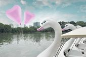 pic of pedal  - Pink heart love balloon float on air with swan pedal boat at public park vintage style - JPG