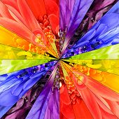 pic of symmetrical  - Rainbow Flower Center Symmetric Collage Made from Collection of Various Multi Colored Wildflowers - JPG