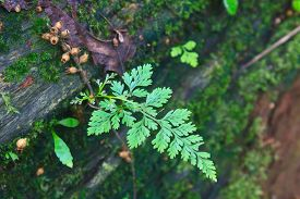 image of fern  - Fern in the forest Forest Ferns and Fallen Log - JPG