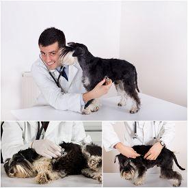 stock photo of ambulance  - Collage of veterinarian and dog images in veterinarian ambulance - JPG