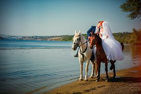 picture of big horse  - Kiss of the groom and the bride during walk in their wedding day against a white horse and brown horse - JPG