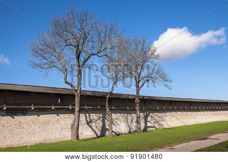 Three trees next to the defensive wall