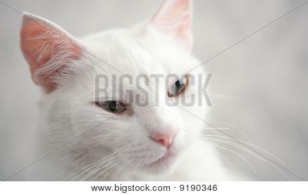 Cats Queen
