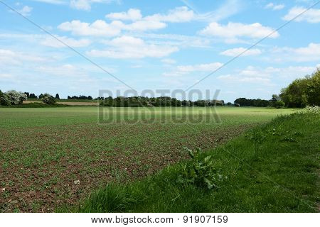 Crops Beginning To Grow