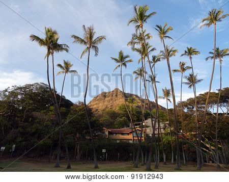 Tall Coconut Trees At Leahi Beach Park With Nice Homes And Iconic Diamond Head Crater In The Backgro