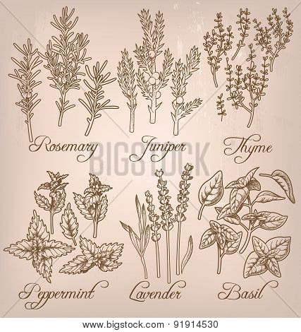 Set Of Essential Herbs