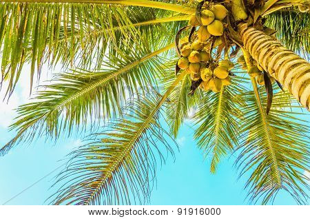 Sandy beach with coconut palm