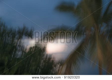 Abstract Background: Green Palm Trees On Tropical Beach In Twilight
