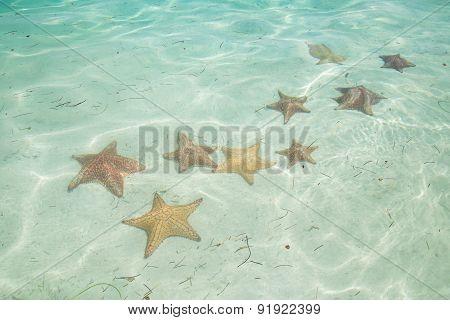 Starfish in the Sea