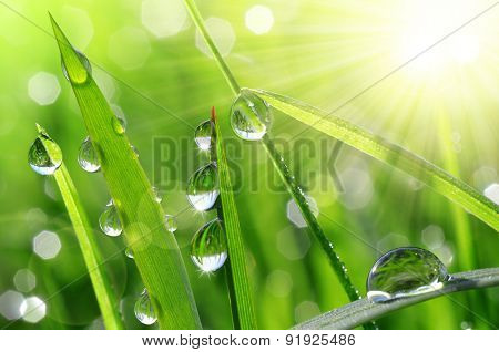 Fresh green grass with water drops closeup. Nature Background