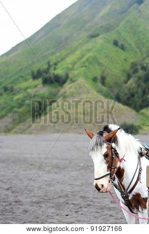 Horse At Bromo Tengger Semeru National Park