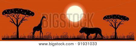 savannah  and animals