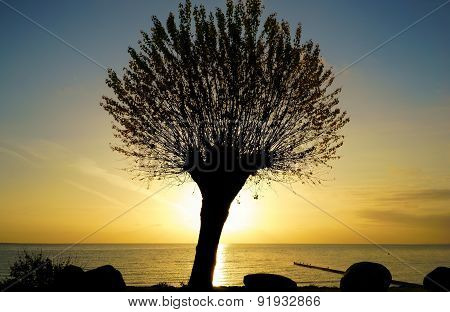 Silhouette Of A Tree At Sunrise