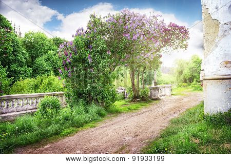 Road to the abandoned farm blooming lilac