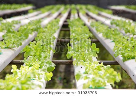 Hydroponics vegetable farm background
