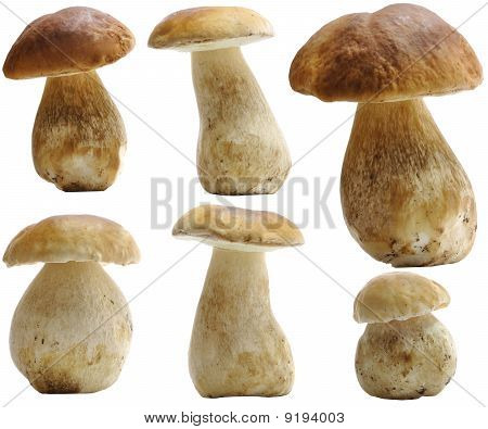 Porcini (boletus Edulis) Set Isolated