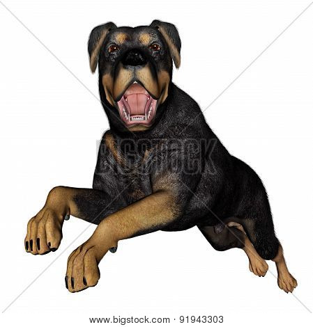 Rottweiller dog runnning - 3D render
