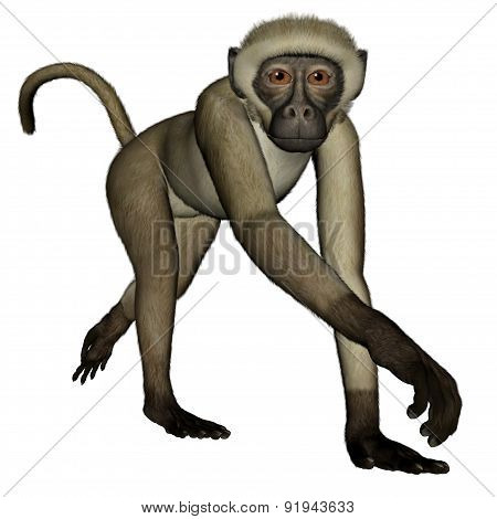 Monkey walking - 3D render