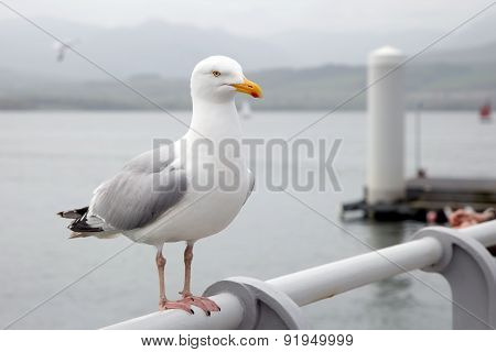 Seagull perched on a pier